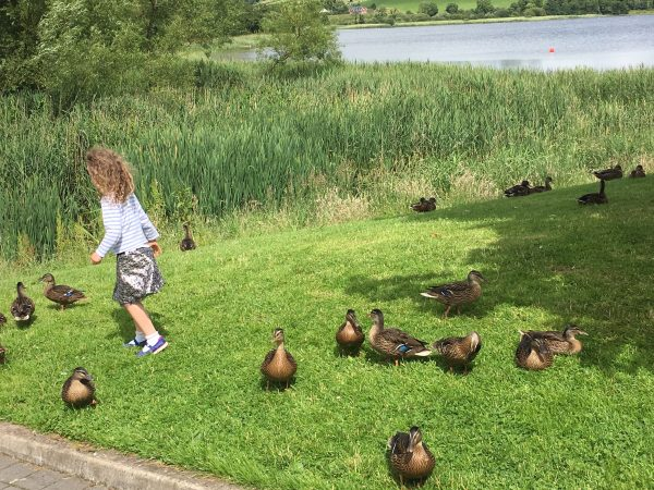 M chasing ducks on a recent trip up to Co. Monaghan