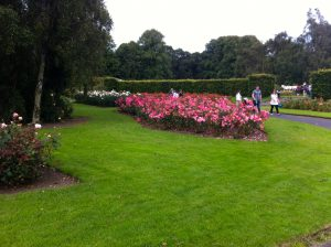 Part of the Rose Garden at St. Anne's Park